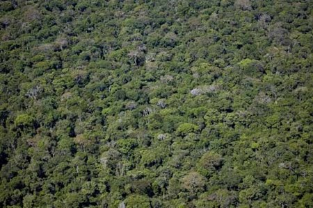 Floresta Nacional de Caxiuanã | Pará