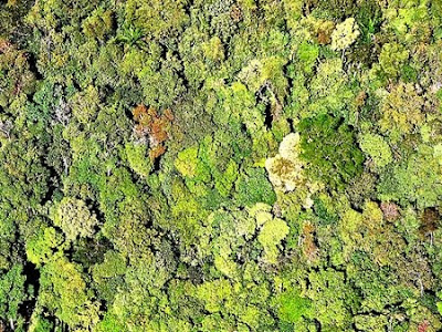 Floresta Nacional de Bom Futuro | Rondônia