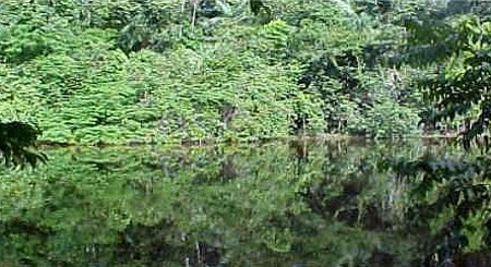 Floresta Nacional de Jamari | Rondônia