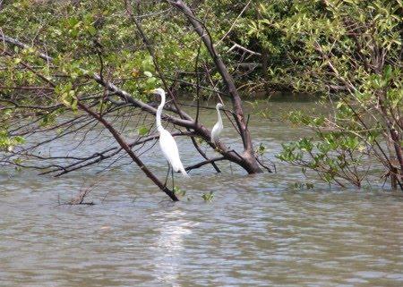Floresta Nacional de Roraima | Roraima