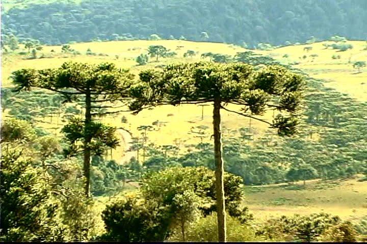 Floresta Nacional de Caçador | Santa Catarina