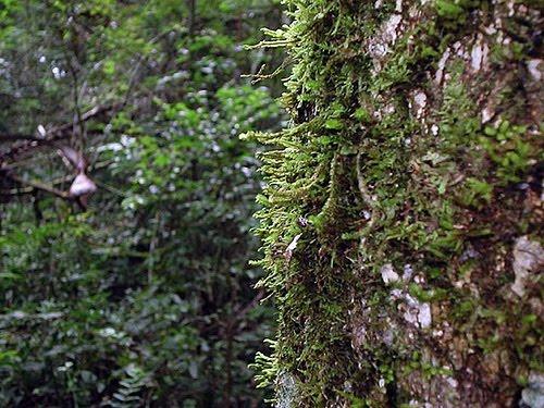 Floresta Estadual de Angatuba