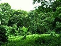 Floresta Estadual de Botucatu