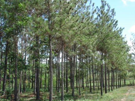 Floresta Estadual de Santa bárbara