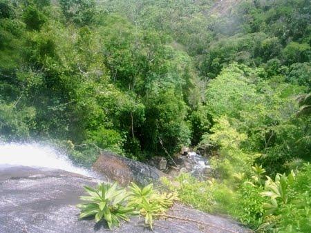 Estação Ecológica de Murici | Alagoas