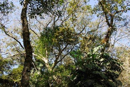 Estação Ecológica Estadual Antônio Mujica Nava | Rondônia
