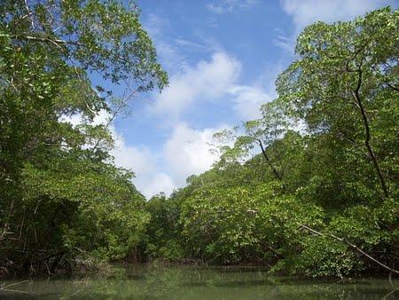 Estação Ecológica Estadual Samuel | Rondônia