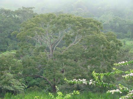 Parque Estadual do Grajaú