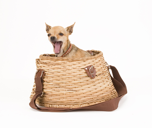 Image Result For Can Chihuahua Eat