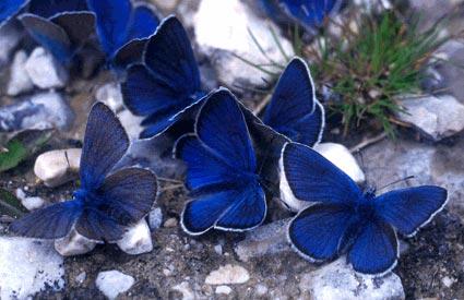 La comunicazione for Immagini farfalle per desktop