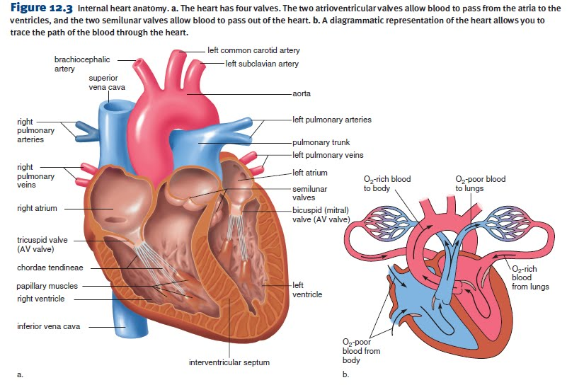 Congestive heart failure (simplified)  i care