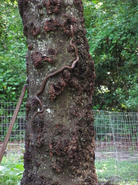 ForestWalkArt: snakes and birds
