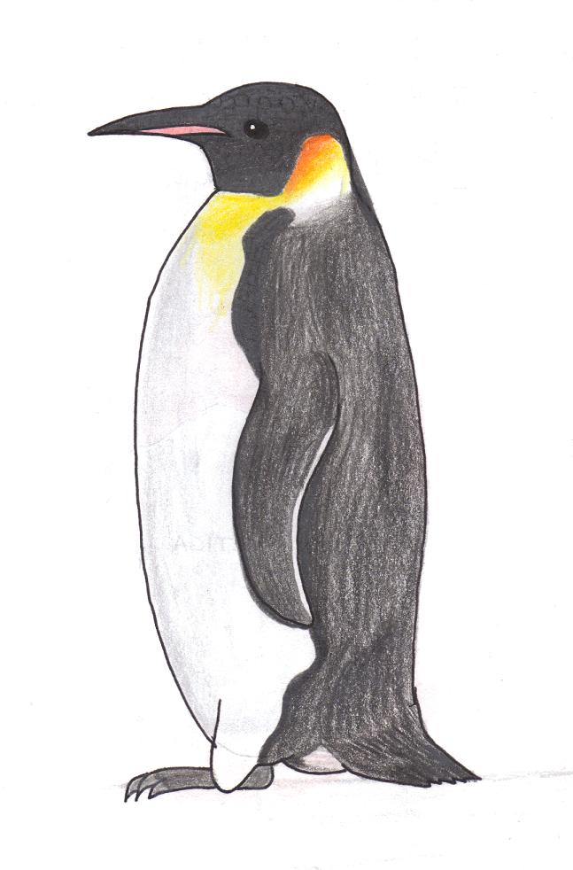 Penguins drawing - photo#53