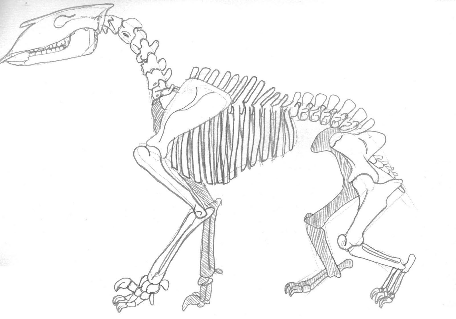 ART Evolved: Life's Time Capsule: Drawing Mega-Mammals