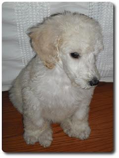 Boy Dog Names Unique Small Dogs