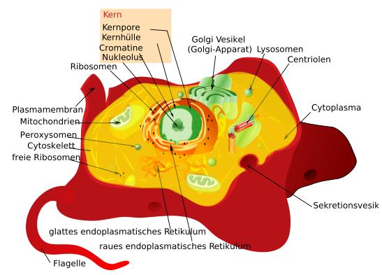 lovescience: Animal Cell Structure