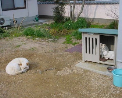 Cat in the Dog House