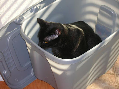 black cat in gray plastic storage bin