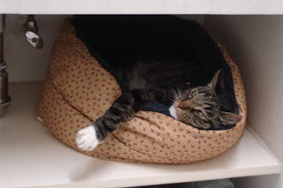 cat in kitty bed, in under sink cabinet