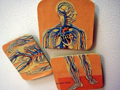 magnet set showing human circulatory system