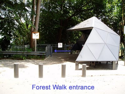 34_ForestWalk_Entrance