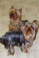 perros para los cuidados de mayores