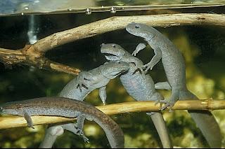 Attack Of The Silverfish Salamander Spotlight 3 The