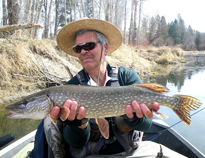 Pike story: Big fish in Bitterroot – but good luck hooking one