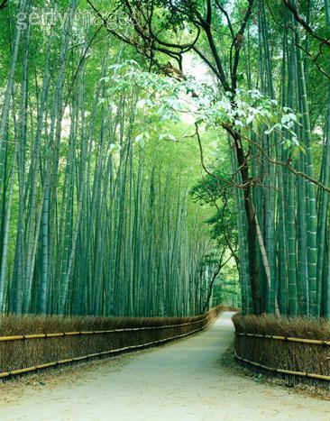 Oasis Reflexiones Y Pensamientos Positivos La Cana De Bambu - Jardin-bambu