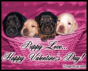 Valentines day puppy wallpapers valentine puppy pictures - Valentines day pictures with puppies ...
