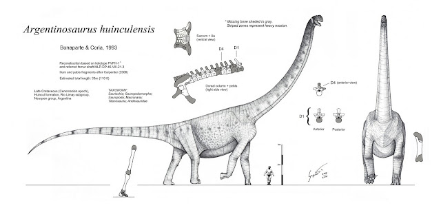 Risultati immagini per Argentinosaurus huinculensis