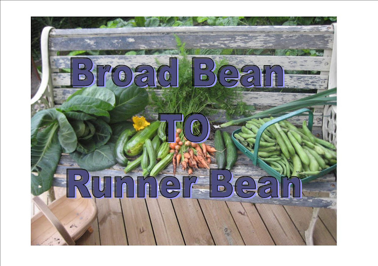 Broad Bean to Runner Bean