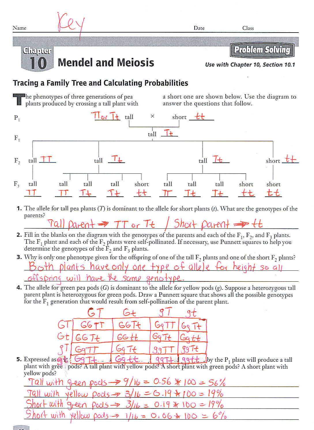 Worksheet Mendel And Meiosis Worksheet Answers Worksheet