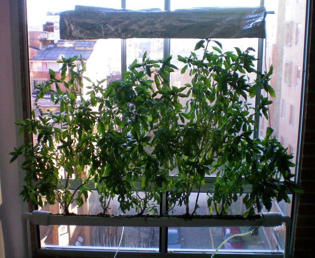 Everything About Hydroponics A Simple Home Made Pvc