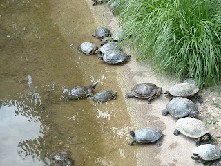Promenades et divagations au parc de la t te d 39 or lyon - Bassin tortue floride strasbourg ...