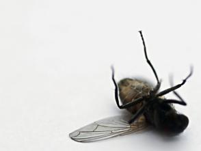 U P  North Life: Black Fly Season!