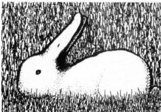 Another Duck or Rabbit Illusion - Visual Phenomena and ...