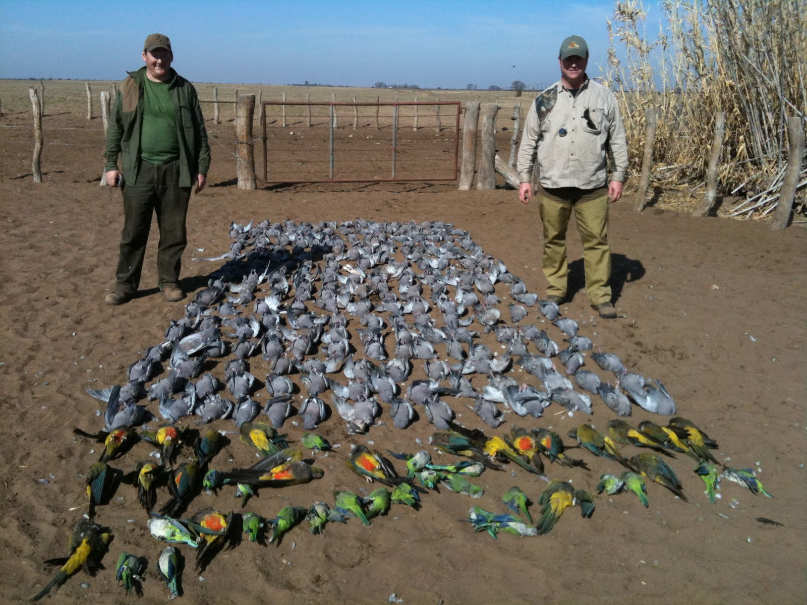 Argentina Duck Hunting Argentina Dove Hunting August 2010