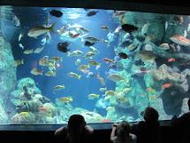 Study.quiet Oklahoma Aquarium