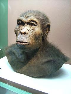 imagen del homo habilis