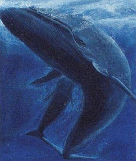Animales: La Ballena Azul