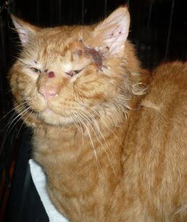 Catsnap Injured Cat