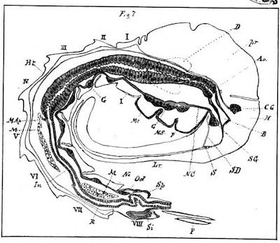 Flag Days: digestive system diagram worksheet