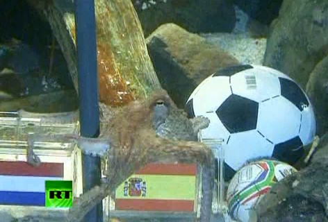In Memory of Paul the Octopus