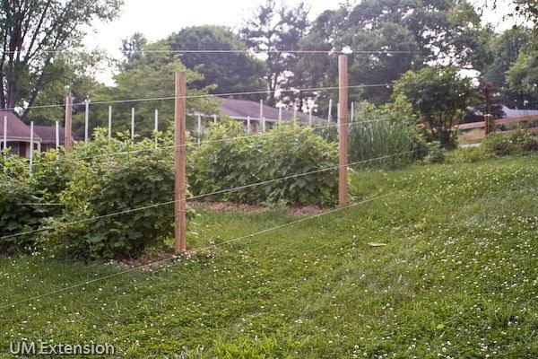 Grow It Eat It Fishing Line Deer Fence