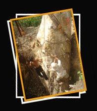Petrified Wood Indonesia