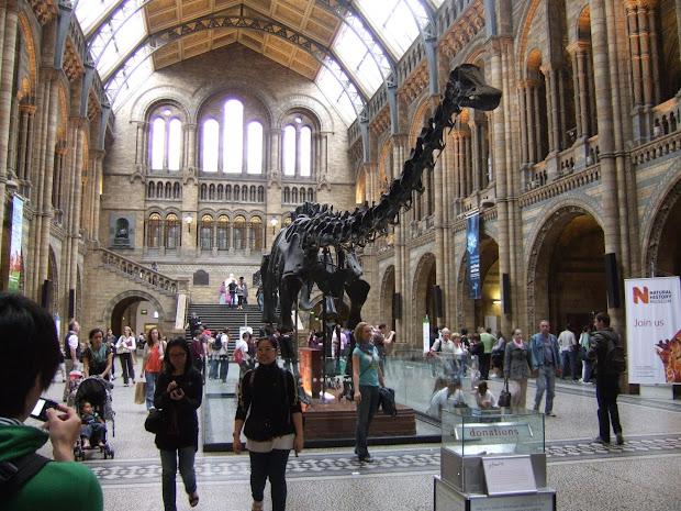 Colganology Bone 37 Tale Of Dinosaur' Tail