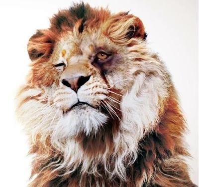 Uma Palavra de Paz  Por que temos que matar um leão por dia  60c54f1dc4628