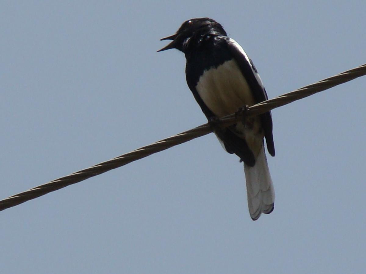 Three black crows confirmation