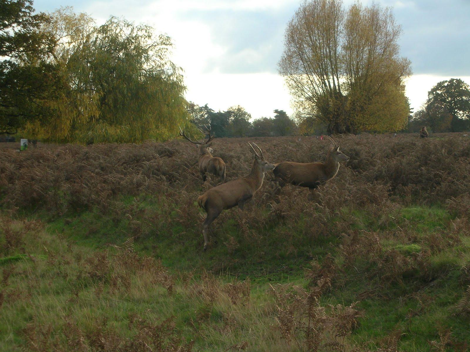 Bushy Park Hampton England Glorious Autumn Ozlems